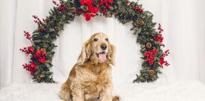 Sesiones de Navidad con Mascotas