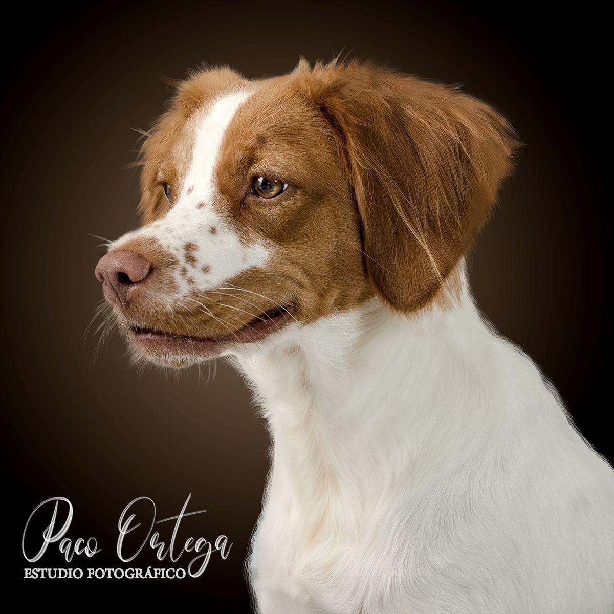 fotógrafo de perros en toledo